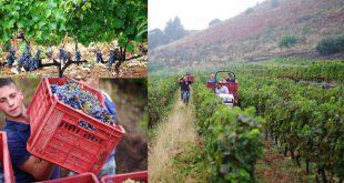 Экскурсия на винодельни вулкана Этна