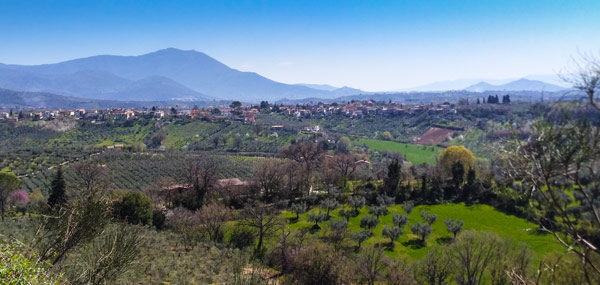 Фара Сабина пейзаж с оливковыми деревьями