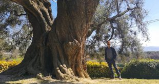 Оливковое масло – экскурсия из Рима