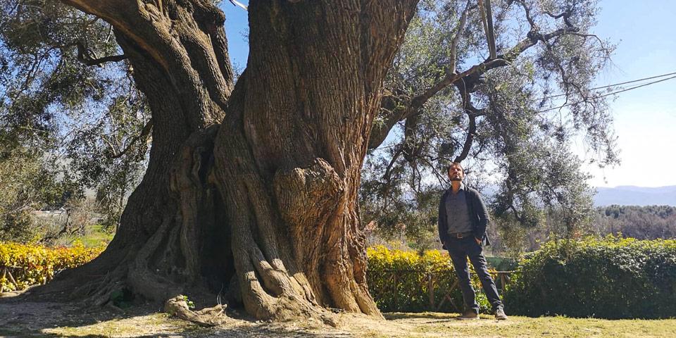 Поездка из Рима на один день в регион Лацио к оливковым рощам